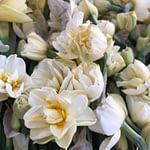 Scented Narcissus