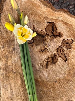 Speciality Daffodils