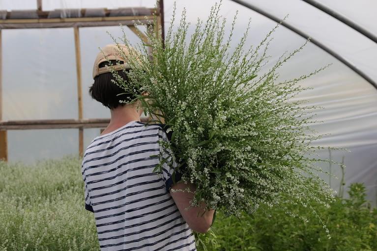 Florist & Trade Open Day –  Monday 21st June